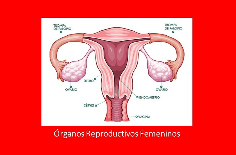Órganos Reproductivos femeninos - Placeres