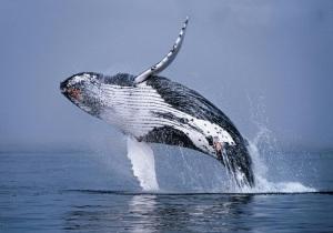 rincon ballena