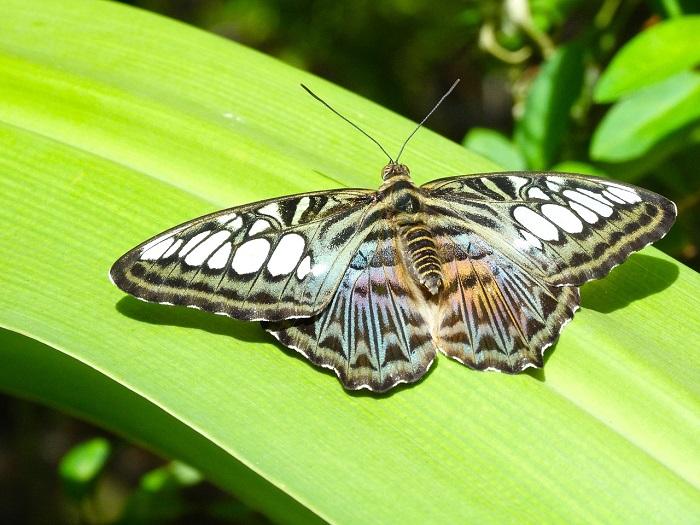 butterfly-1539518_1280